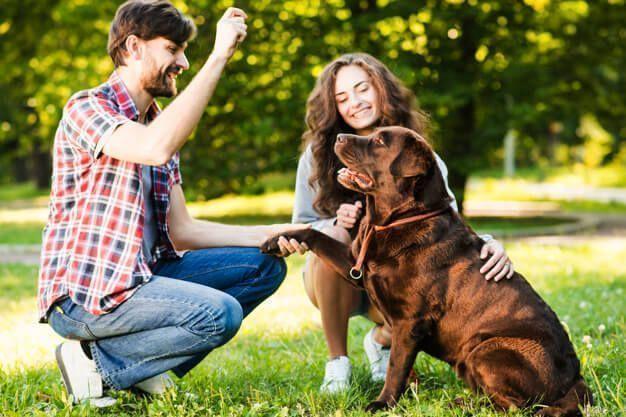 Como educar um cachorro: dicas de adestramento para pets
