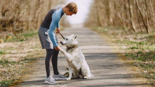 Por que fazer o curso de adestramento de cães?